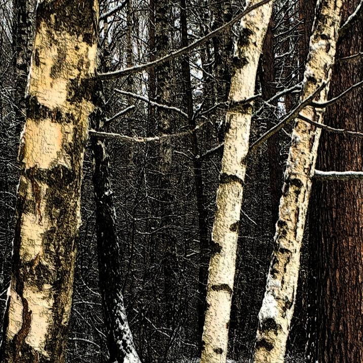 skogen_11