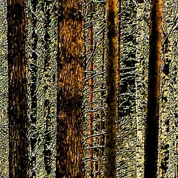 skogen_4